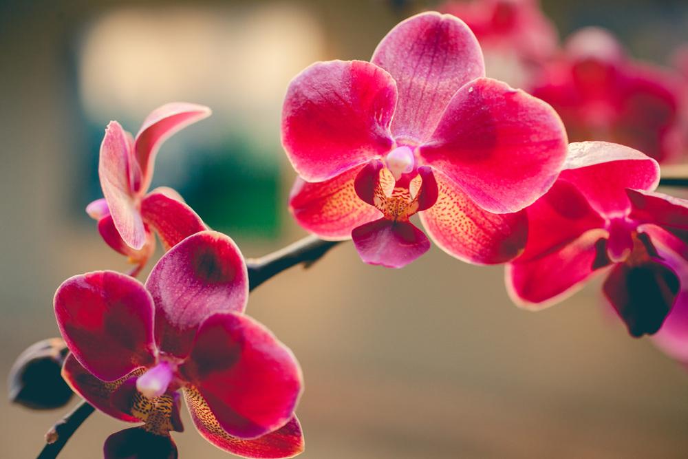 OrchidShow04.jpg