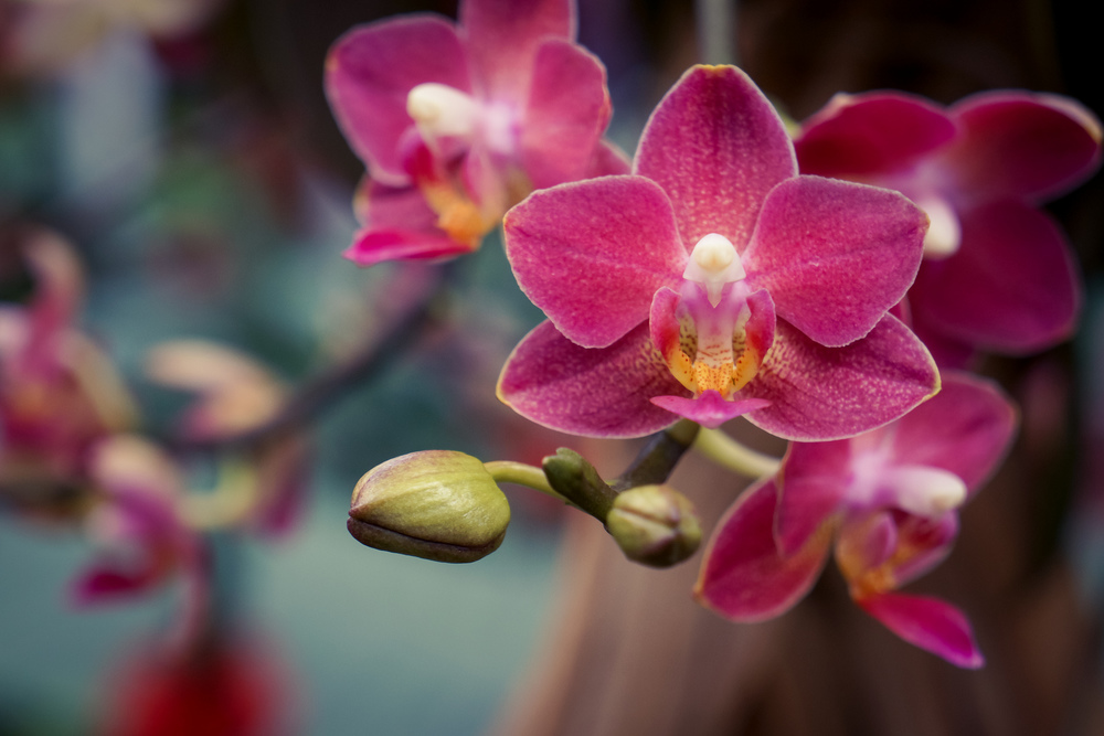 OrchidShow-Sony1.jpg