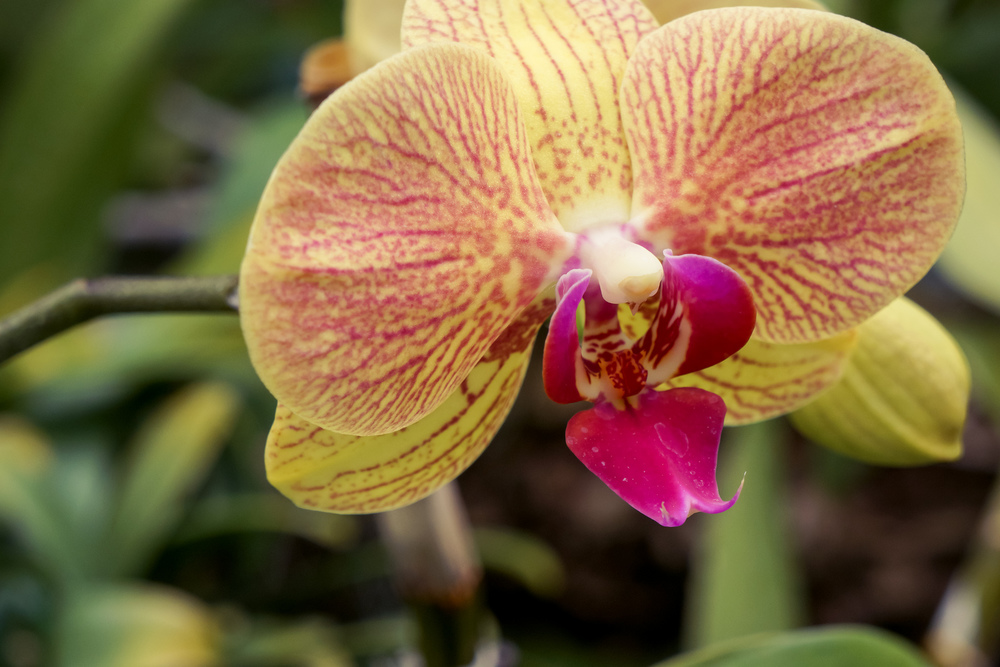 OrchidShow-Sony3.jpg