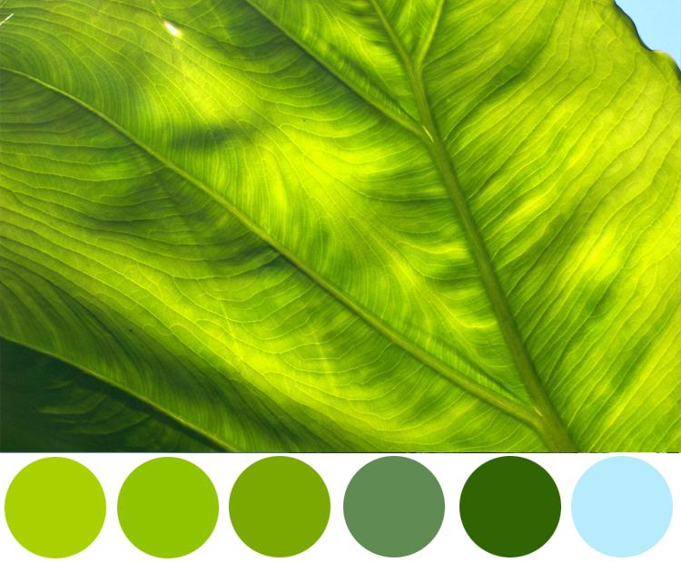 Wednesday Color Inspiration- Leaf