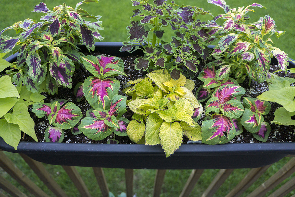 Patio Garden Railing Planter