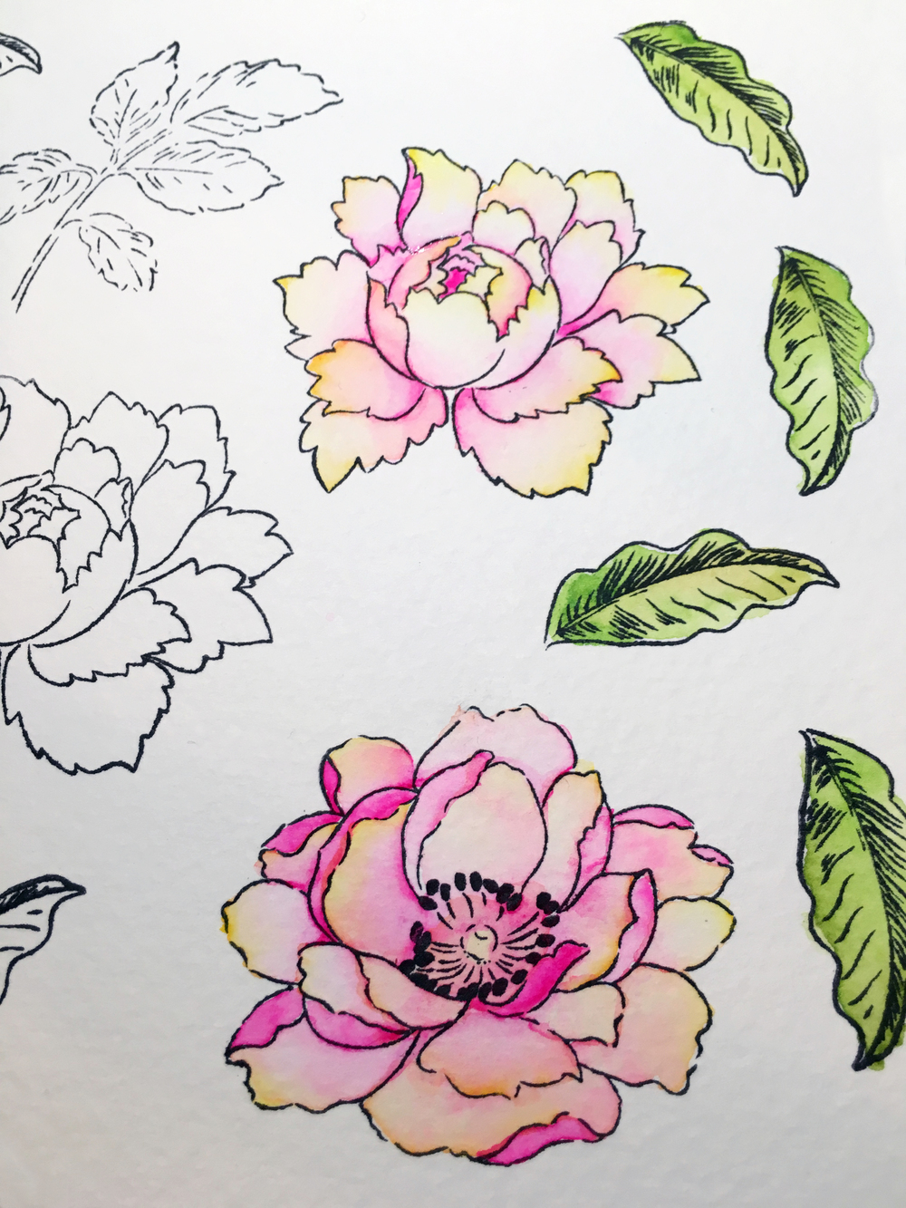 Watercolor Peony Stamps from Altenew