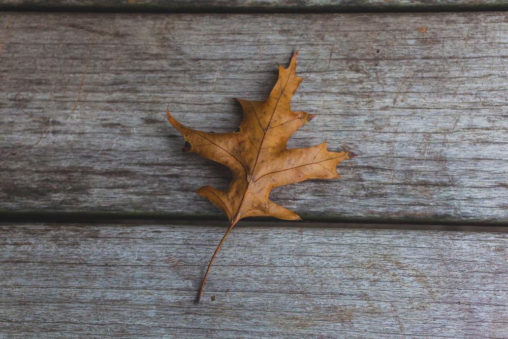 Fall Leaf - april bern photography
