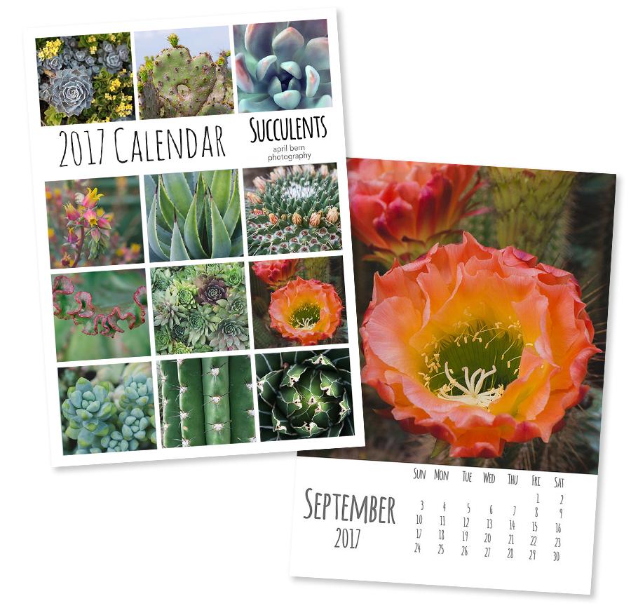 2017 Photo Calendar - Succulent Calendar