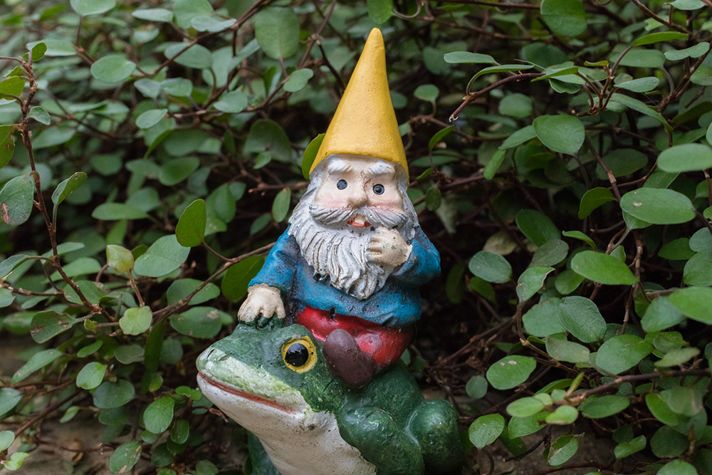 Garden Gnome on Frog - april bern phototraphy