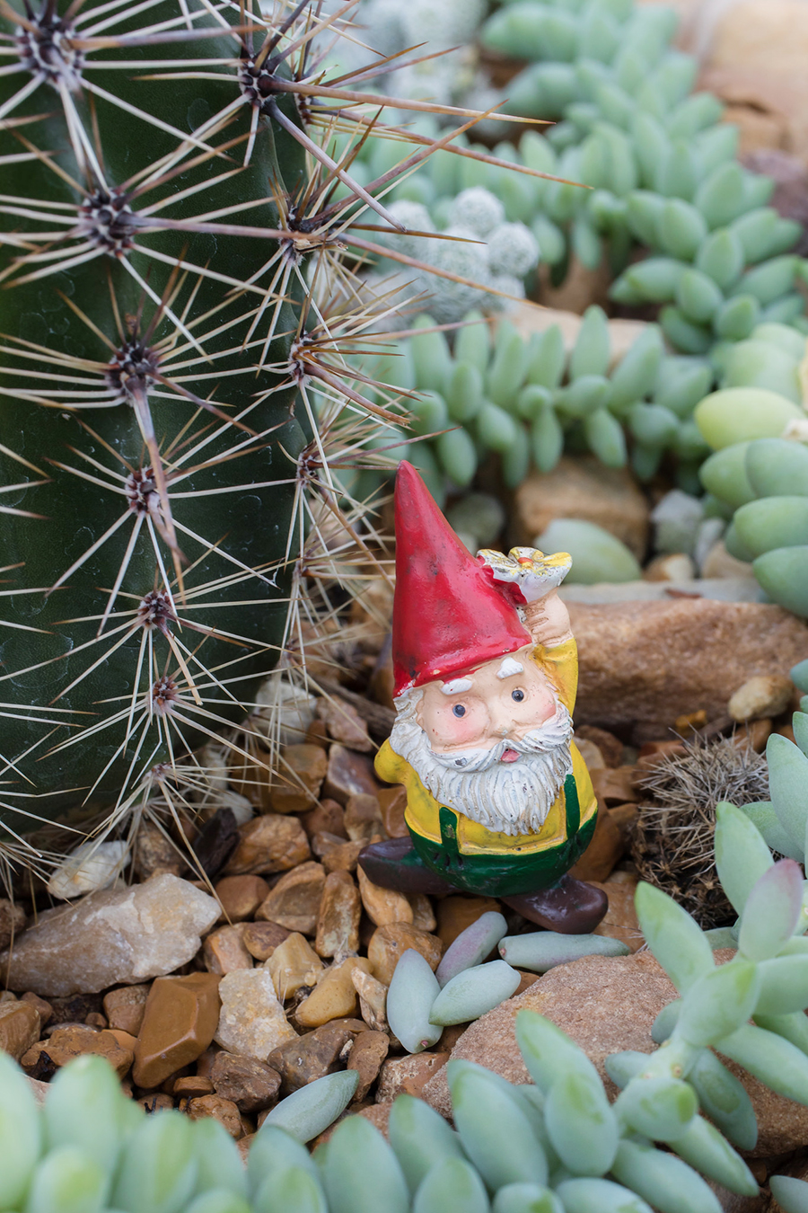 cactus garden gnome - april bern photography