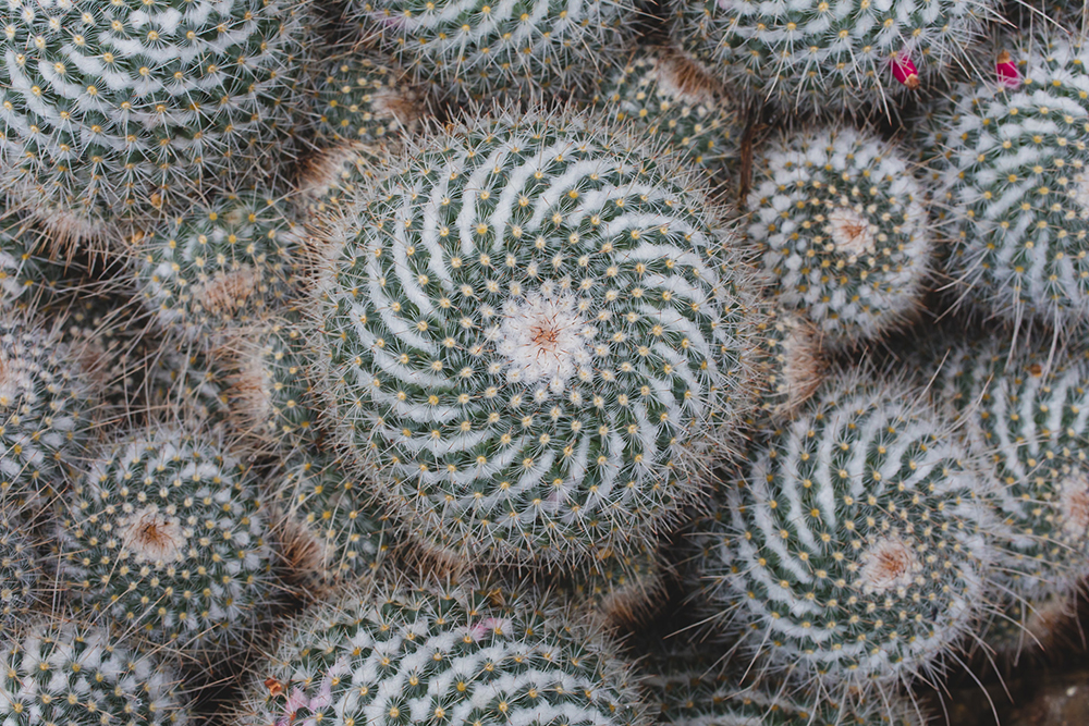 Cactus swirl - april bern photography