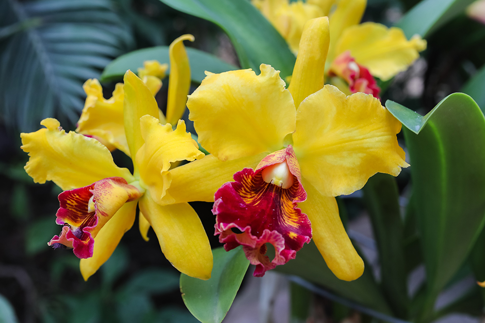 Orchids Nicholas Conservatory by april bern photography