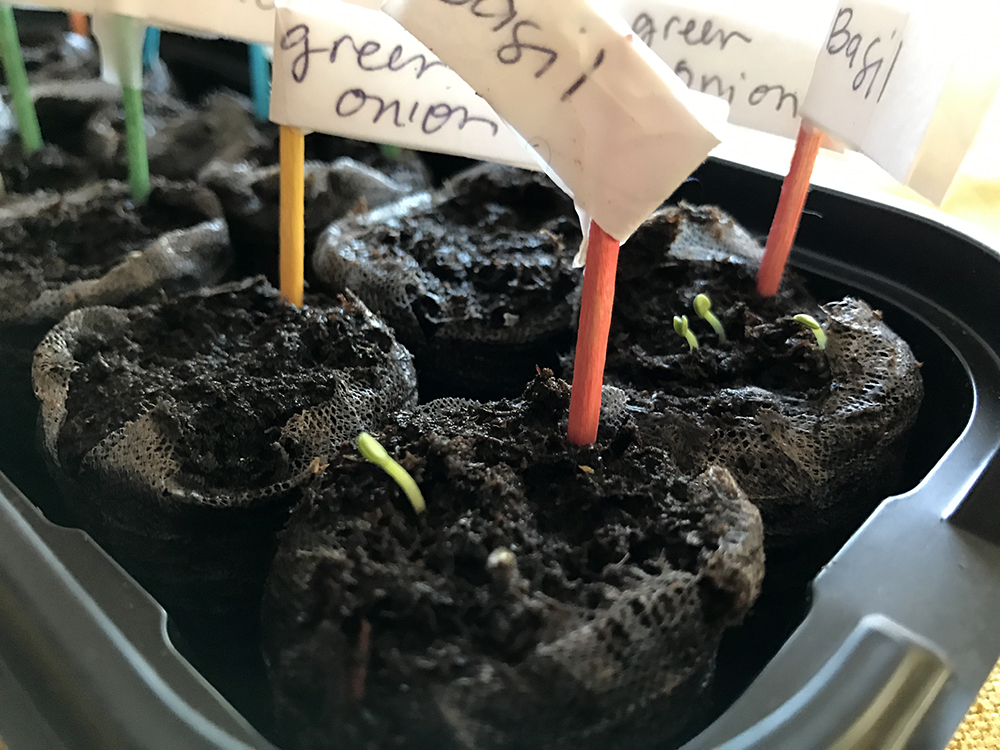 2017 Herb Garden