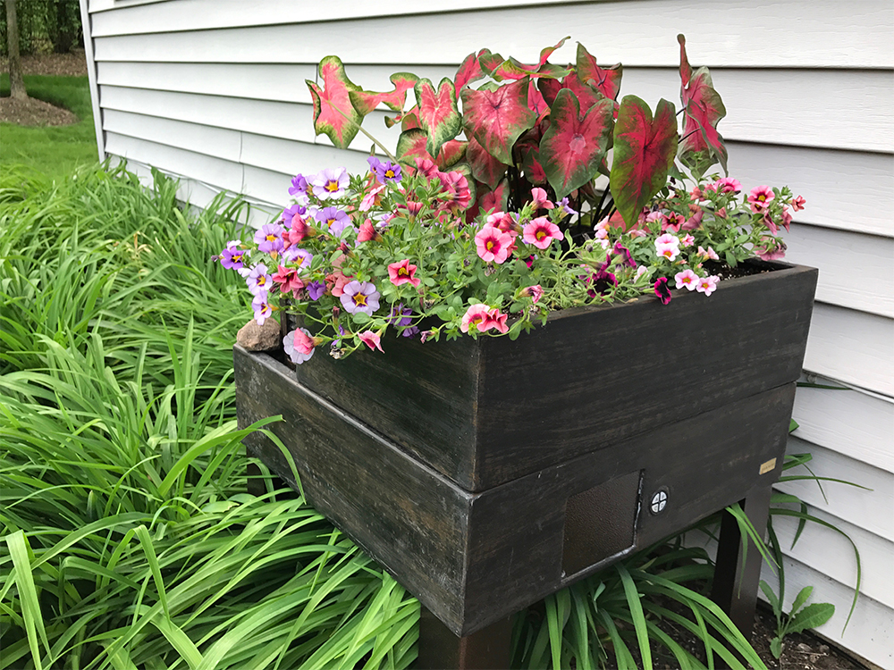 This is my newest planter/fountain filled with Caladiums and more tiny petunias.
