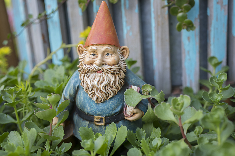 My very own gnome garden