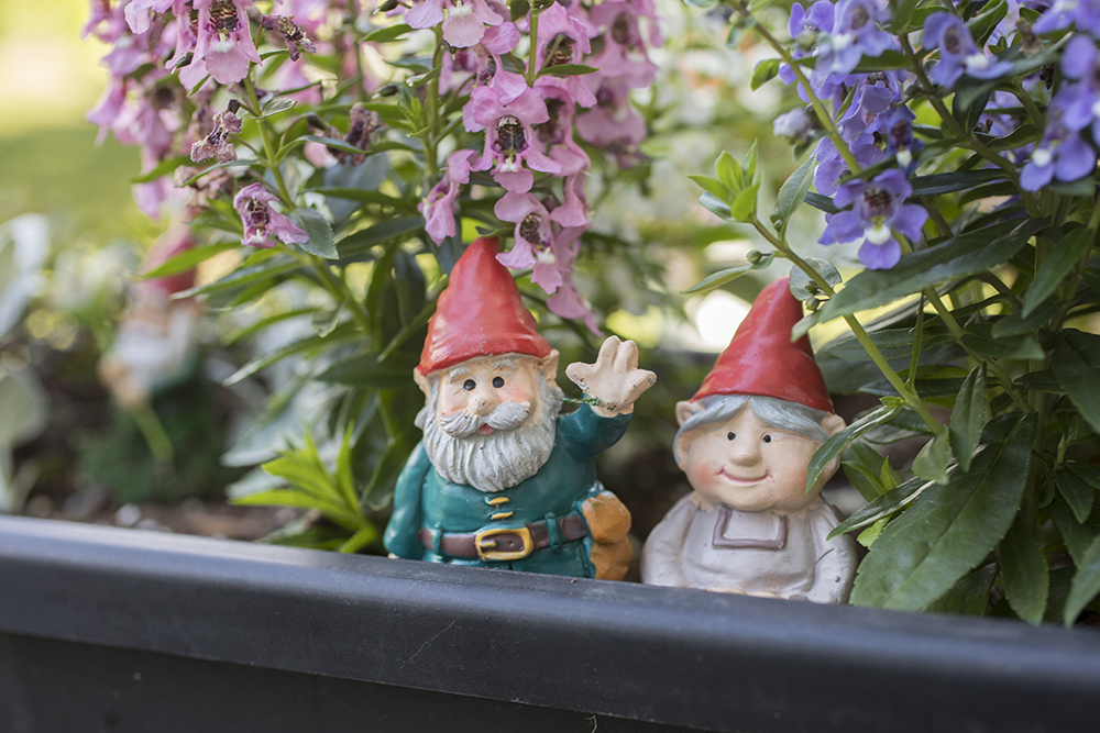 garden gnomes hanging out