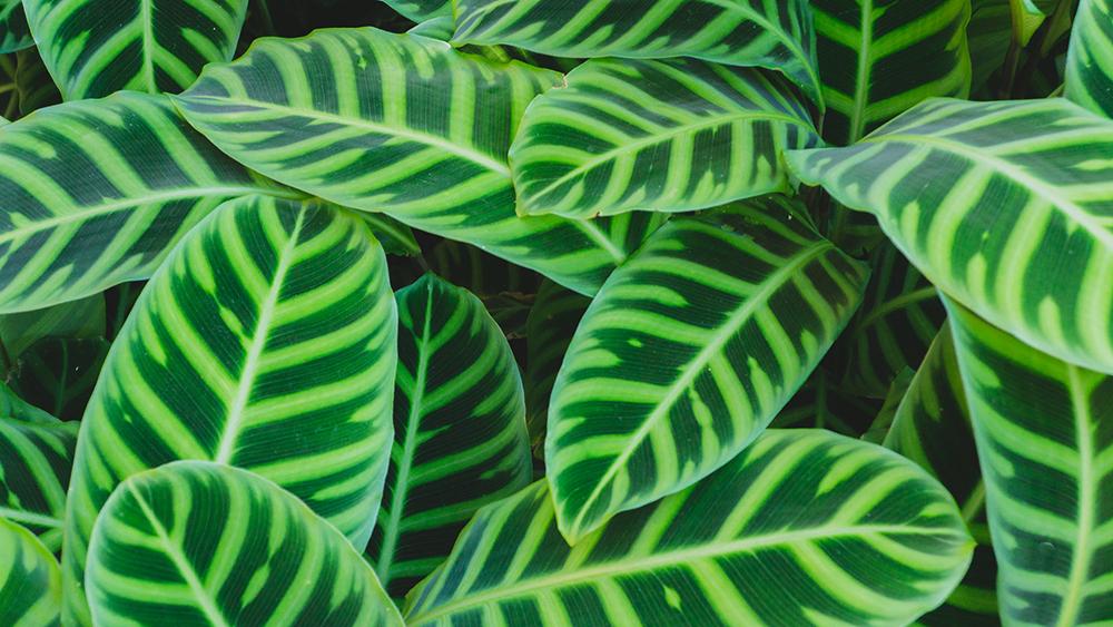 green-foliage.jpg