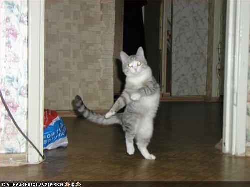 dancingcat.jpg
