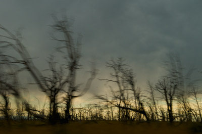 Burned trees, also near Cortez.
