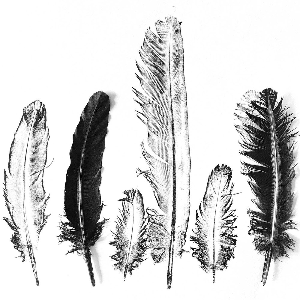 DOVE FEATHERS - Direct Printmaking