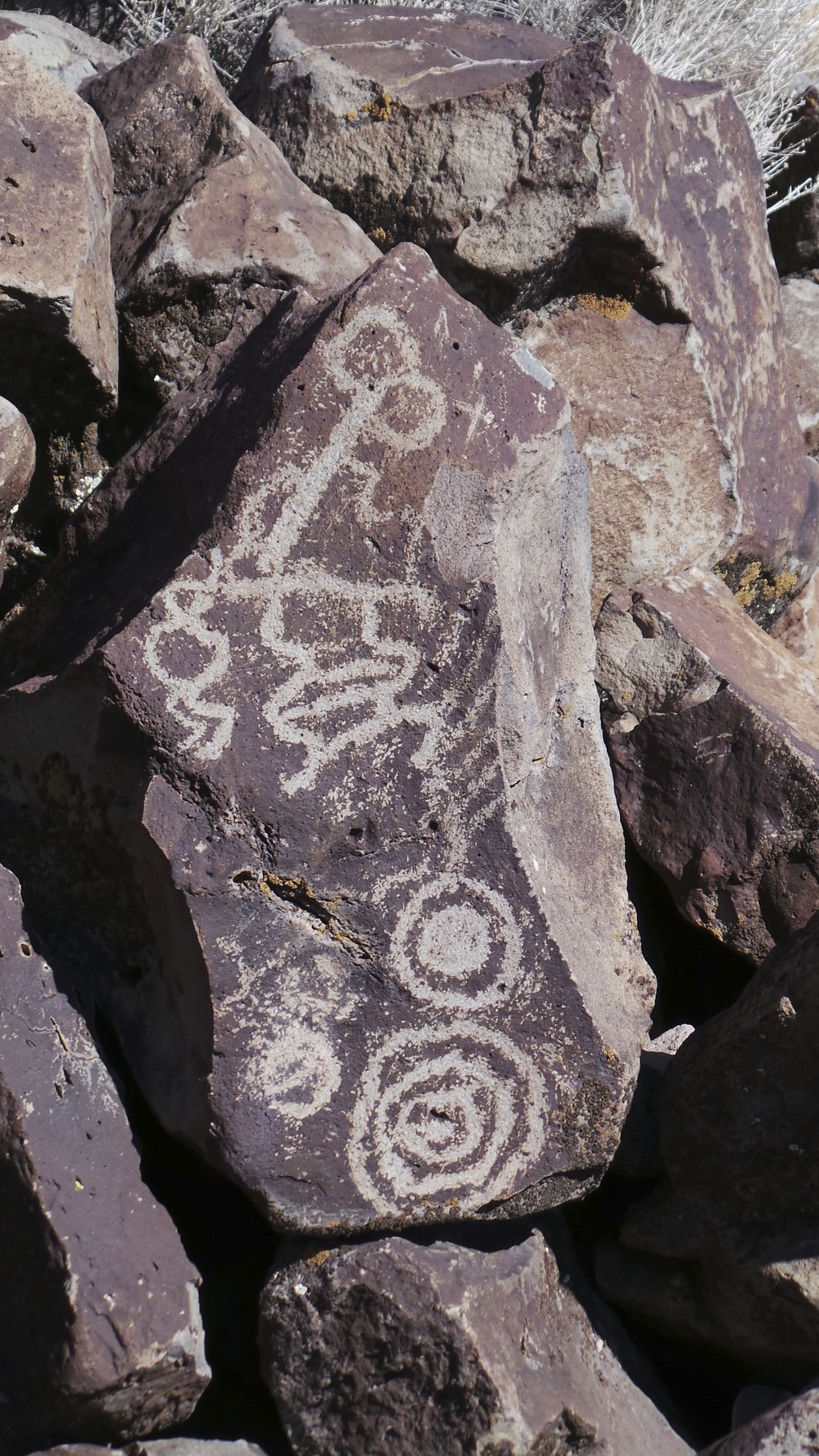 Lagomarsino Petroglyph Site 187.jpg