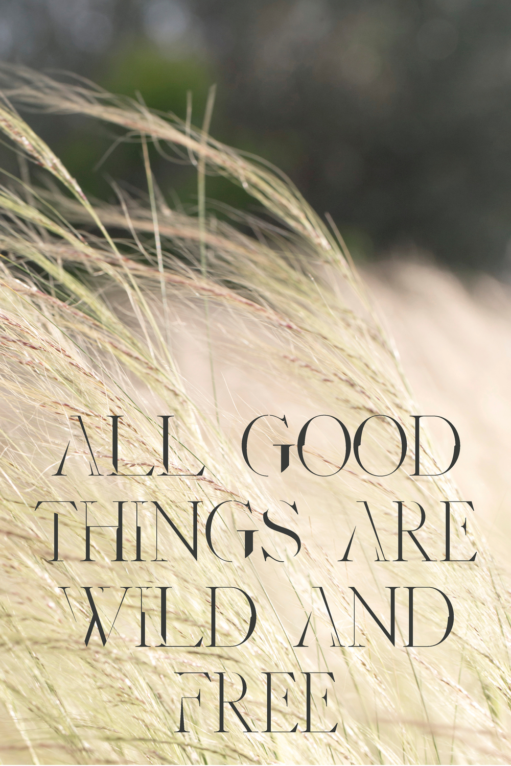 "Julie Cimpko   - ""All Good Things are Wild and Free""....well said."
