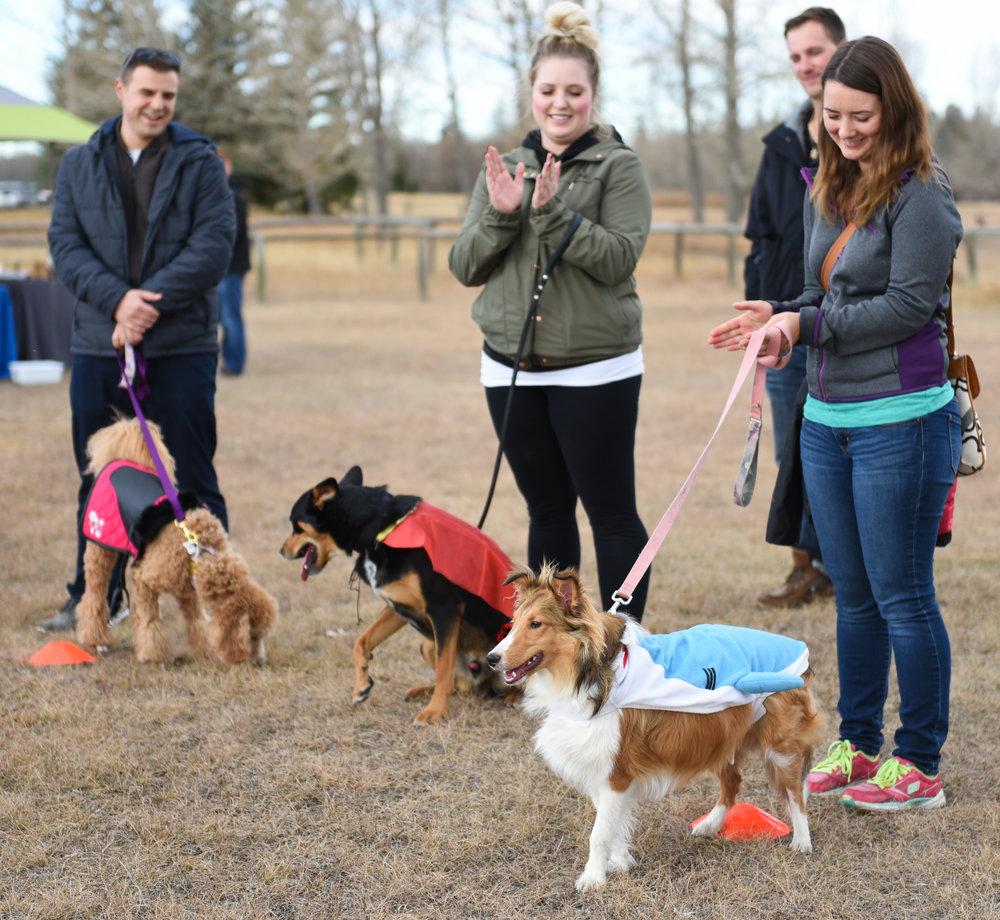 20171027 Tails of Help 2017 Howloween Dog Walk SOT 0472.jpg