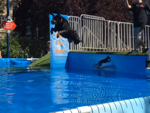 dock diving dogs!