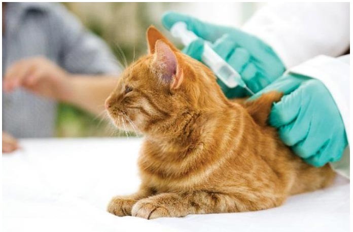 animal-health-week-2018-vaccines-cat.jpg