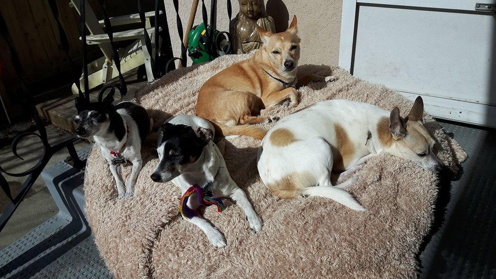 Dioji and his posse relaxing in the sun