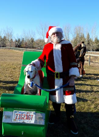 Holly and her owner don have become terrific ambassadors for tails of help, appearing at many events such as the annual tails of help howloween dog walk