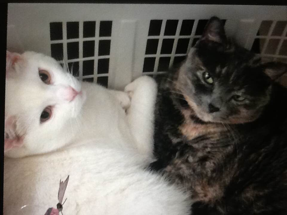 Jackie-and-Mimi-photo10a.jpg