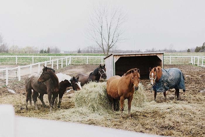 horse-stables-fonthill-001.jpg