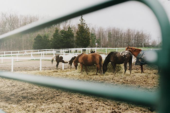 horse-stables-fonthill-005.jpg