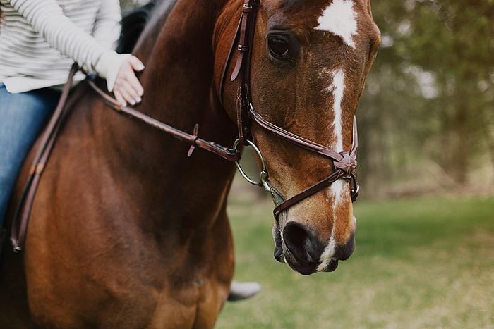 horse-stables-fonthill-025.jpg