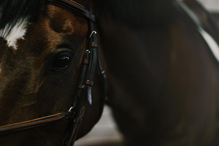 horse-stables-fonthill-087.jpg