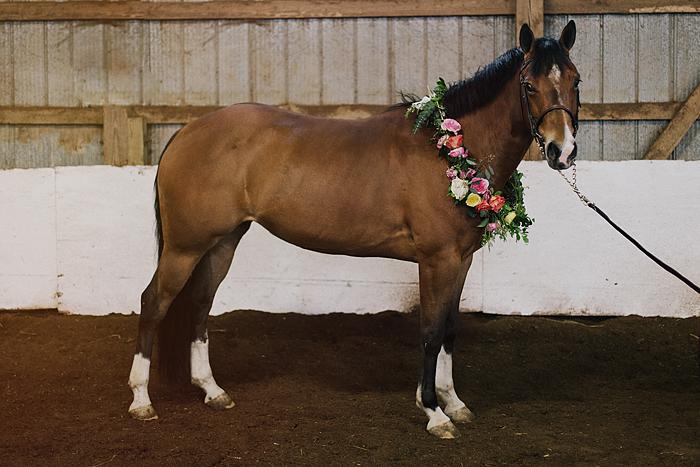 horse-stables-fonthill-091.jpg