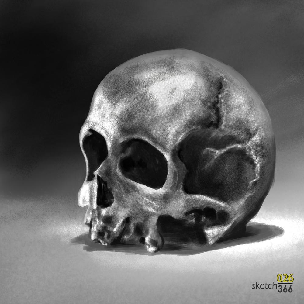 skull still life - from photo - digital paint