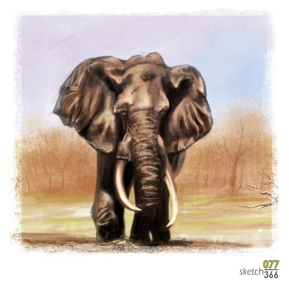 elephant - digital paint