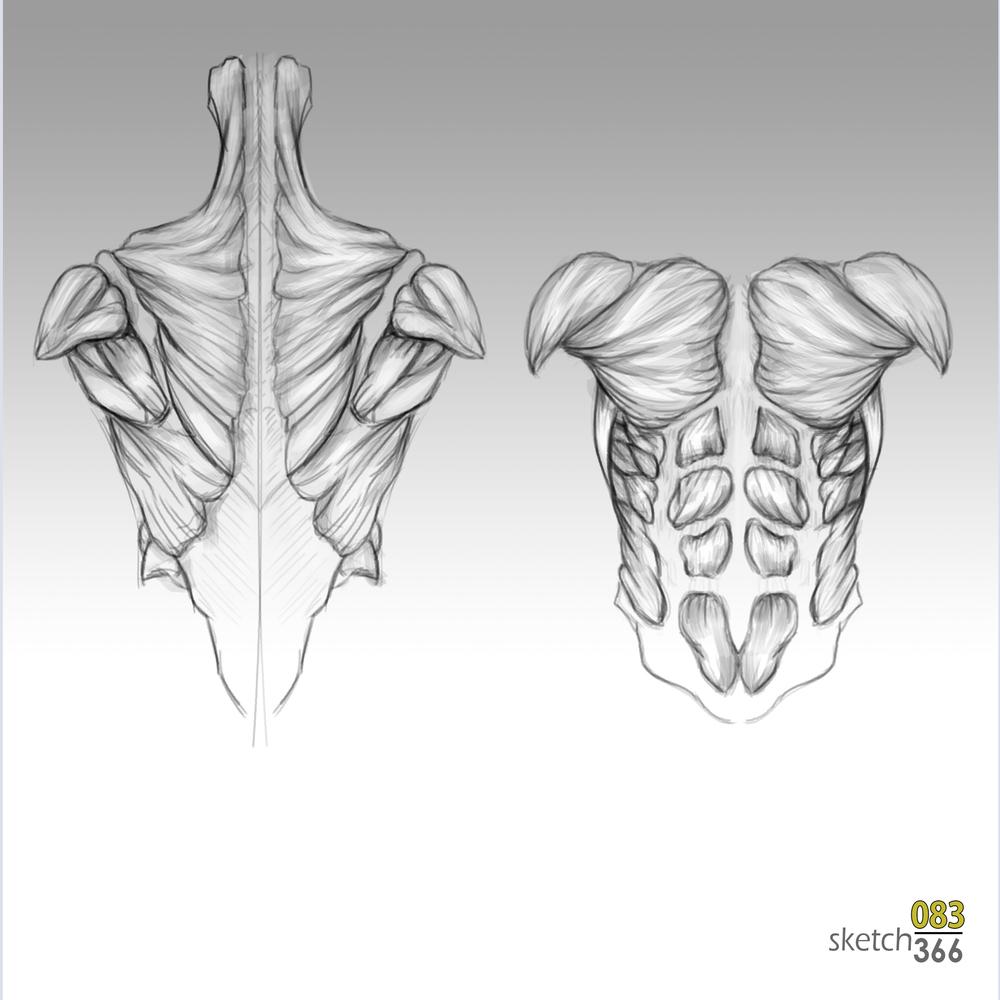 upper body anatomy - digital pencil