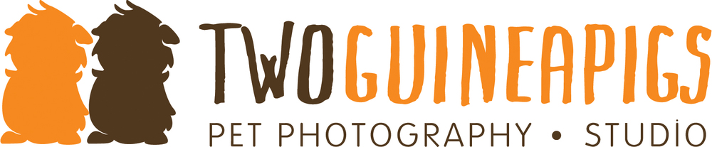 twoguineapigs pet photography | Sydney Award Winning Pet Photographer and Documenter