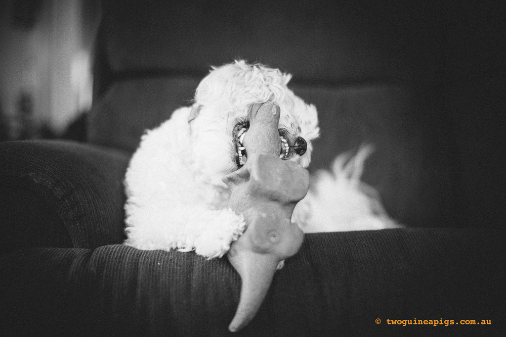 twoguineapigs_mozart-squarespace-8.jpg
