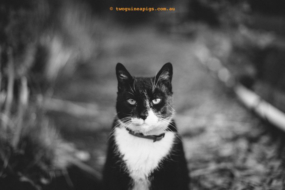 twoguineapigs_rambo-squarespace-1.jpg