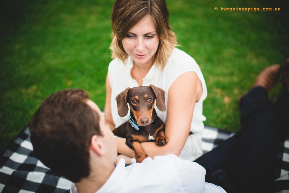 twoguineapigs_schnitzel_daschshund-27.jpg