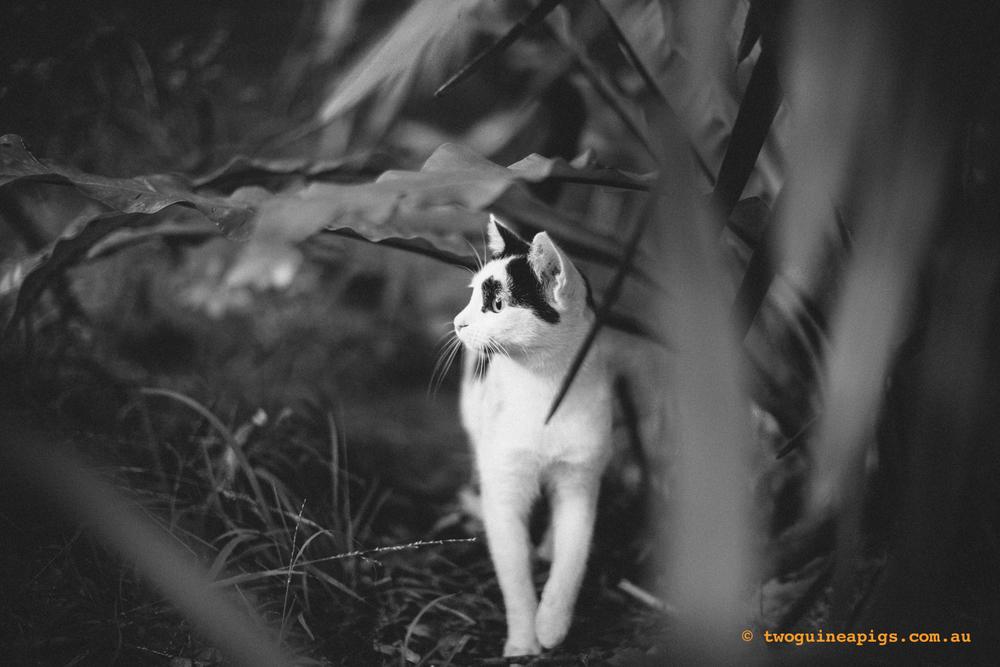 twoguineapigs_neot_cat-2.jpg