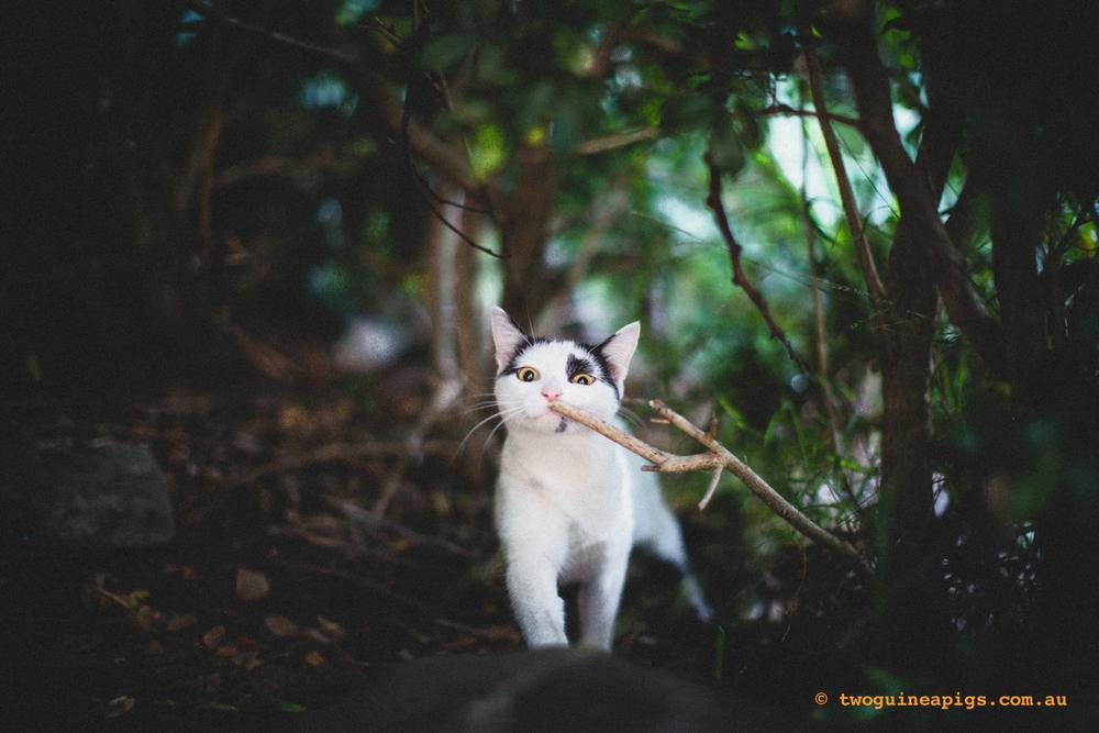 twoguineapigs_neot_cat-3.jpg
