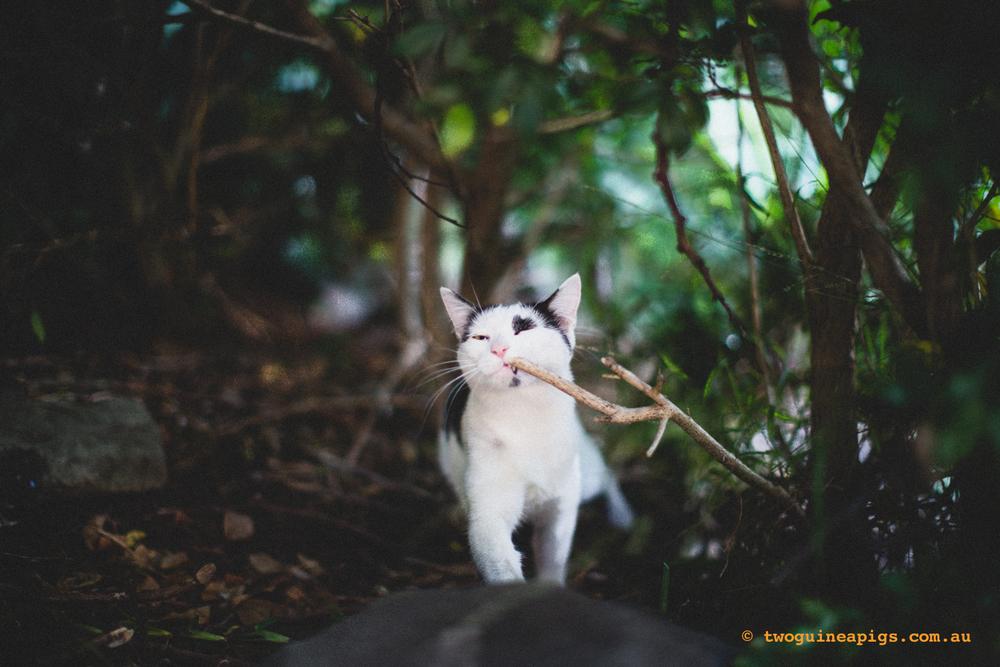 twoguineapigs_neot_cat-4.jpg