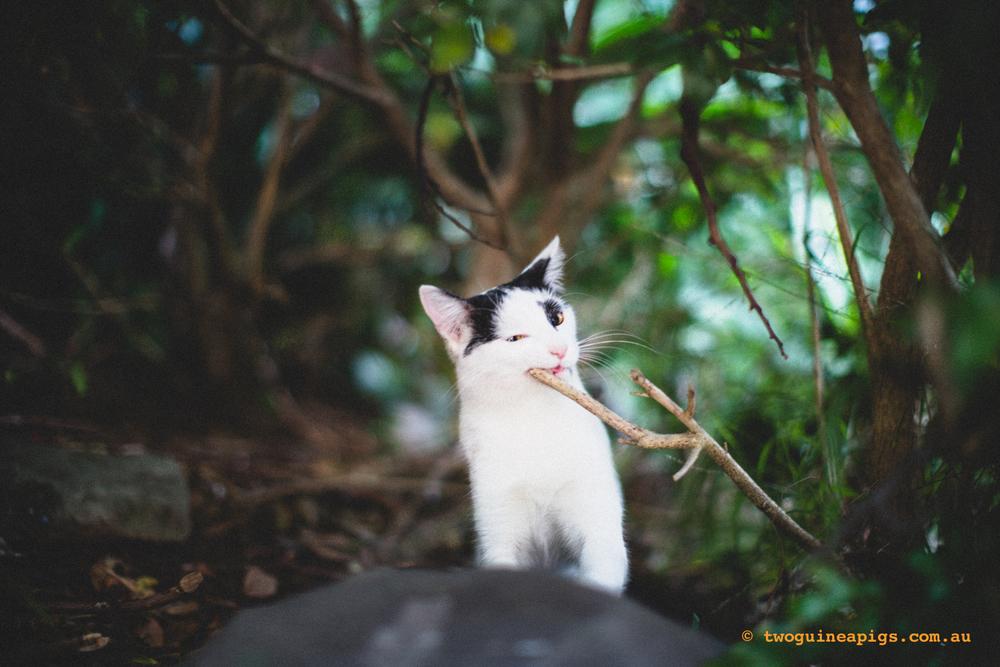twoguineapigs_neot_cat-5.jpg