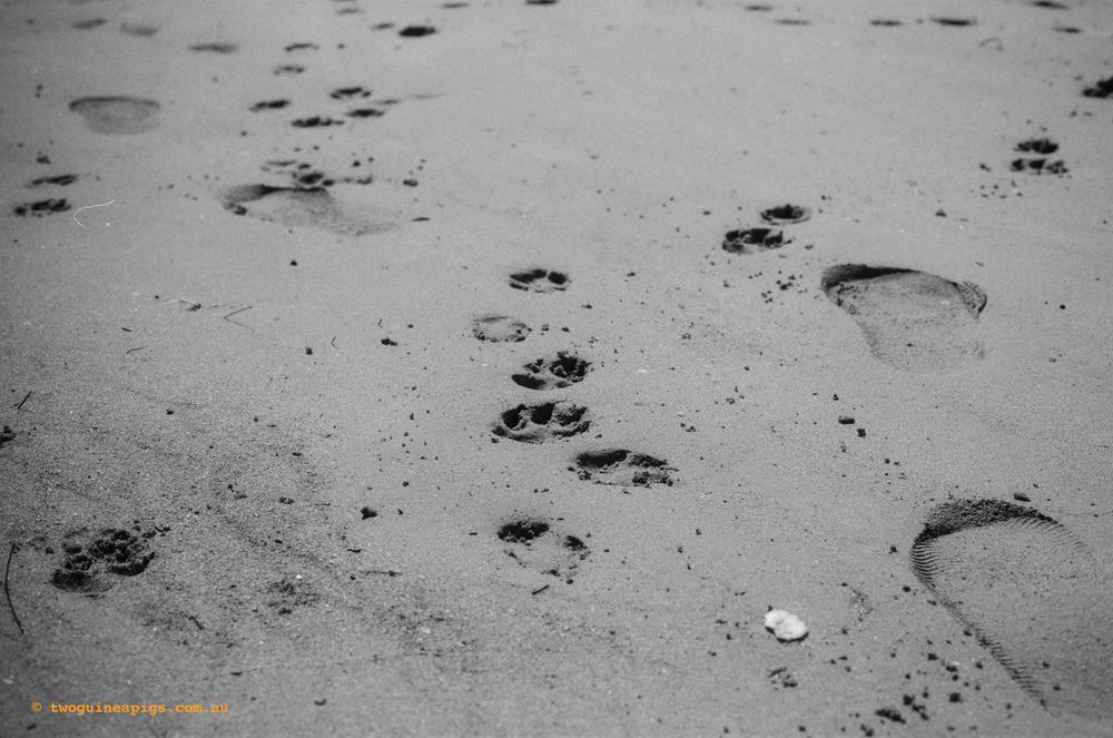 twoguineapigs_landscapes_dogprints_1500.jpg