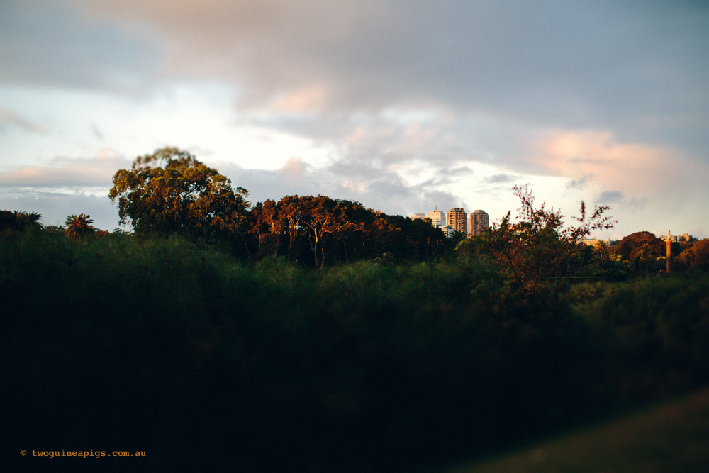twoguineapigs_pet_photography_autumn-in-sydney_landscapes-9.jpg