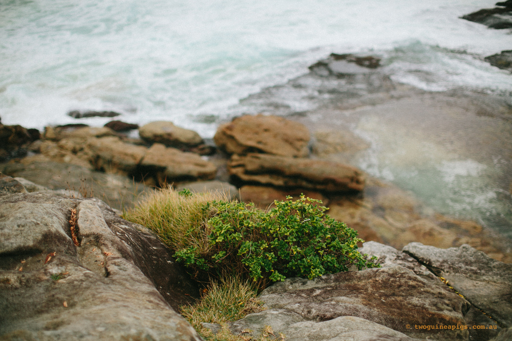 twoguineapigs_clovelly_cliff_1500.jpg