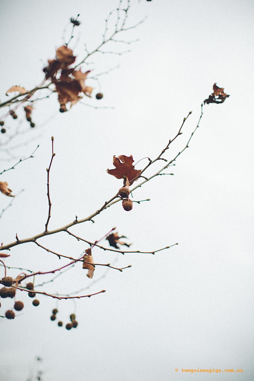 twoguineapigs_winter-sticks_1500-1.jpg