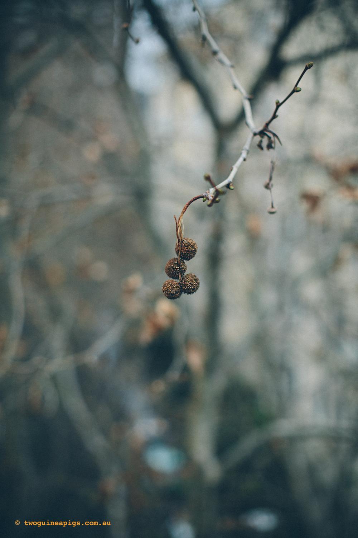 twoguineapigs_winter-sticks_1500-2-3.jpg