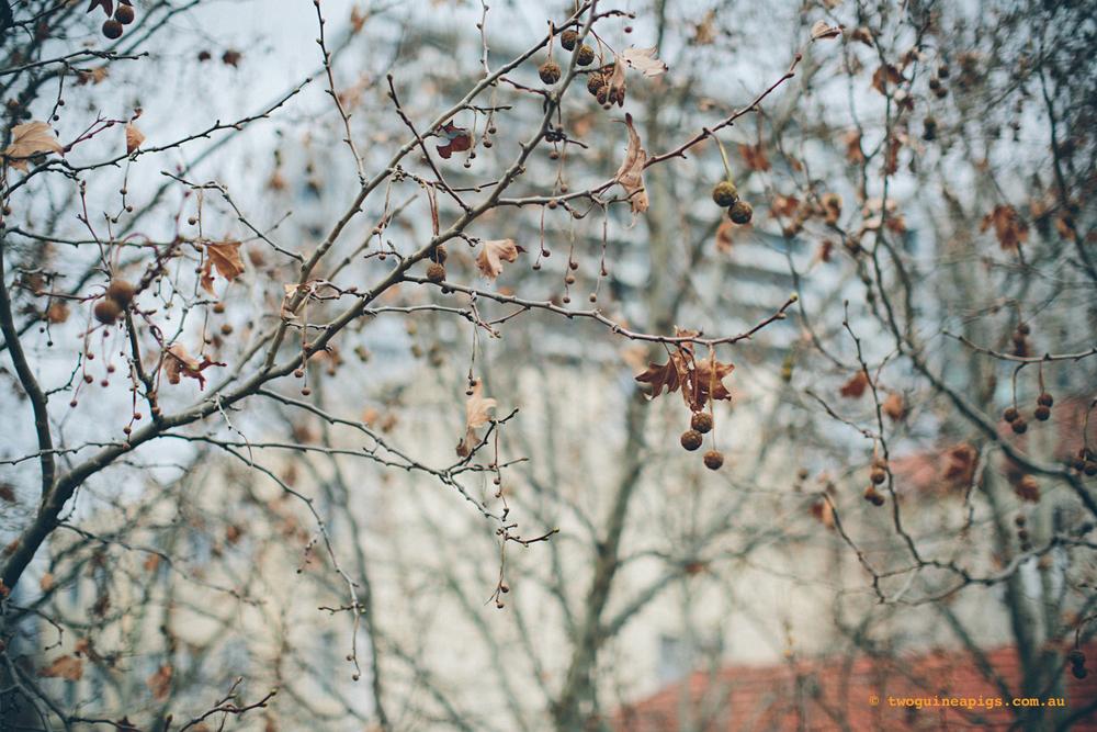 twoguineapigs_winter-sticks_1500-2-4.jpg